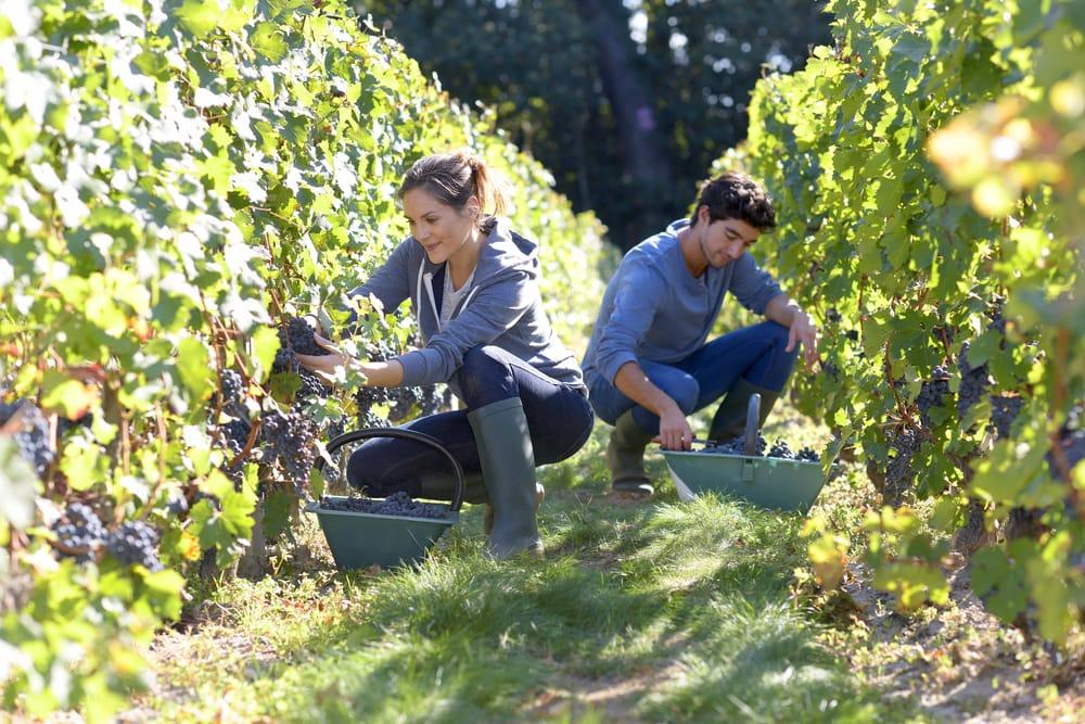 Piano Sviluppo Rurale: record giovani agricoltori in Abruzzo, con 1.088 domande