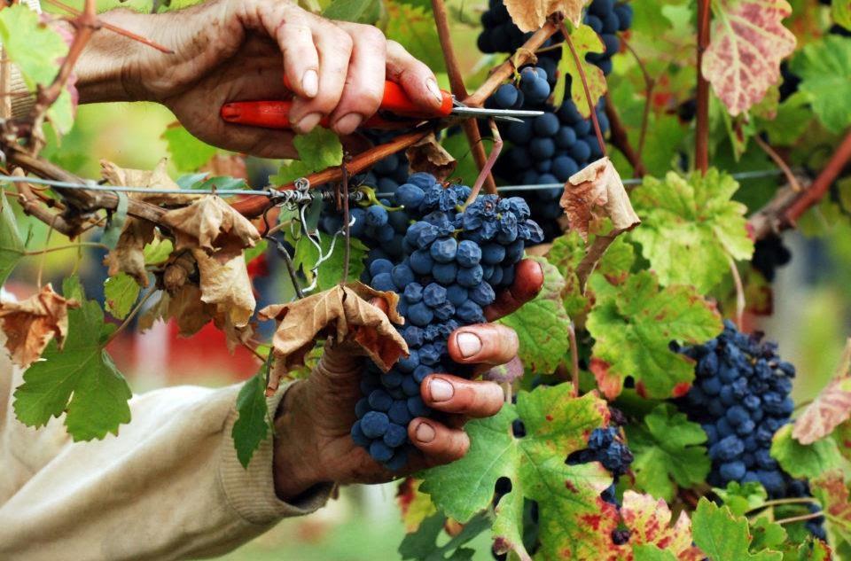 Vino, Coldiretti firma il protocollo per la formazione dei produttori