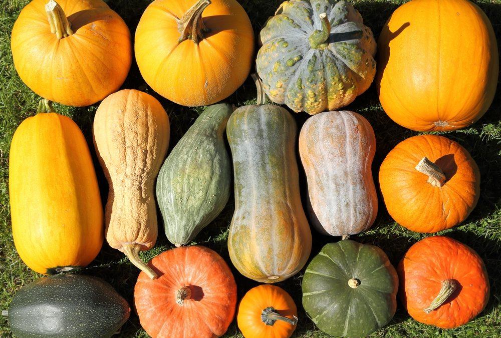 Zucca, regina di Halloween e della cucina d'autunno