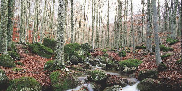 Giornata Internazionale Foreste, PEFC: +7% boschi certificati in Italia