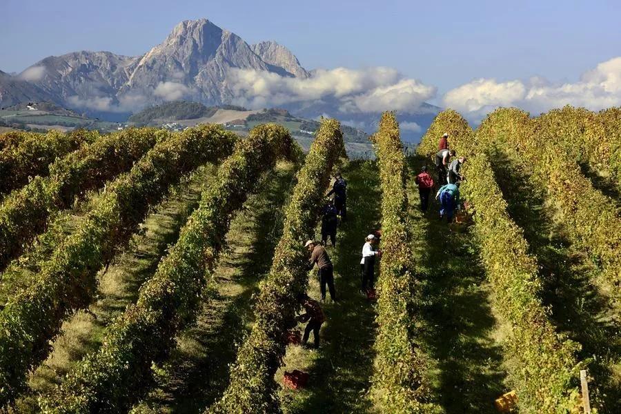Export ed e-commerce: i vini abruzzesi crescono anche con la pandemia