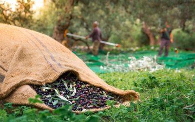 Nasce dall'Abruzzo il movimento turismo dell'olio, spin off del movimento del vino